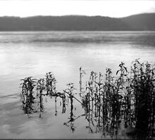 Susquehanna River by Emily Savill