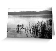 Susquehanna River Greeting Card
