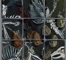 Haldane's Precambrian Puzzle (config.B):  true trilobite by Glendon Mellow
