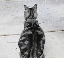 Cats v2 by Sandra Chung