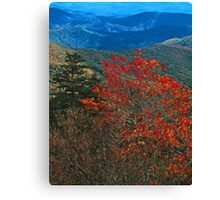 MOUNTAIN ASH, GREAT SMOKY MOUNTAINS NP Canvas Print