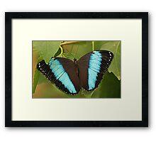 Richard's Morpho Butterfly Framed Print