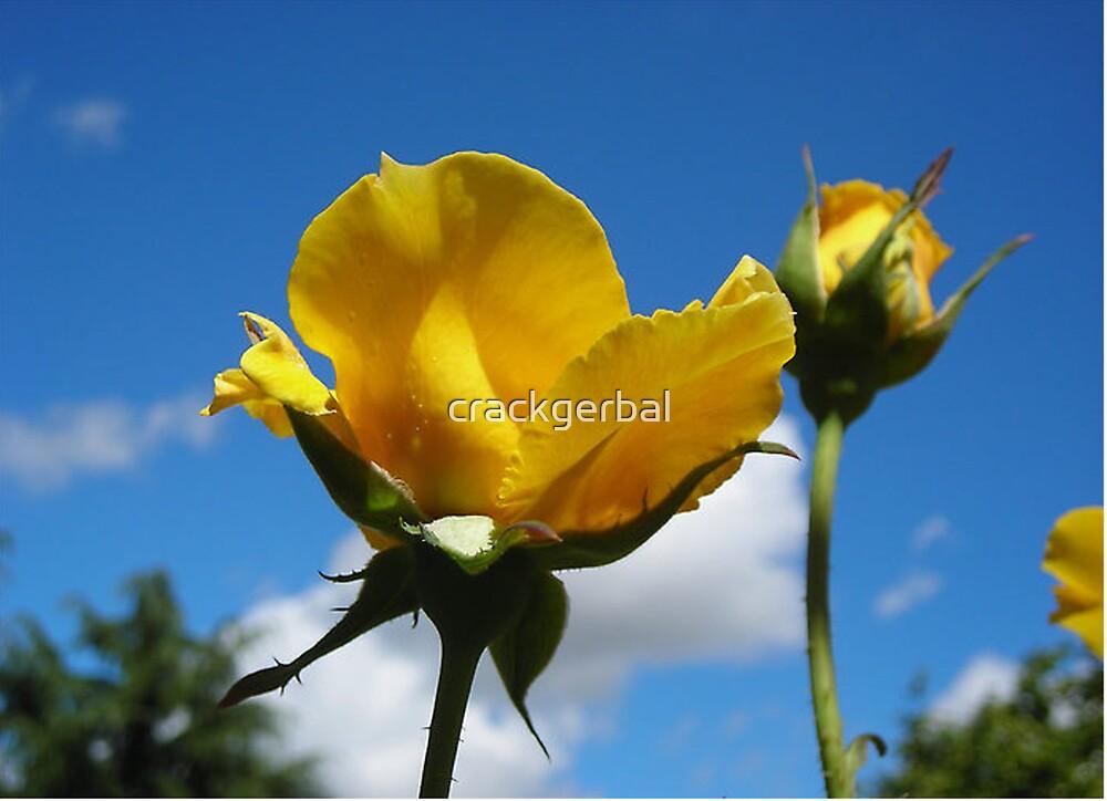Yellow Rose by crackgerbal