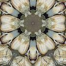 Seashell pattern by Jayson Gaskell