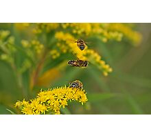 Flirting Hoverflies Photographic Print
