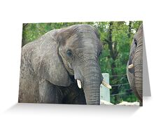African Elephant Headshot Greeting Card