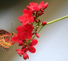 One Butterfly on a Geranium Stalk by Laurel Talabere