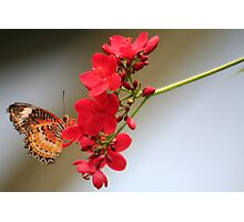 One Butterfly on a Geranium Stalk Photographic Print