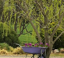 Willow and Wheelbarrow by Dominique Sparks