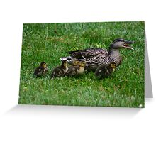 Mother Duck w/ babies Greeting Card
