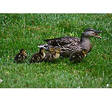 Mother Duck w/ babies Photographic Print