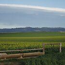 ~Barossa Valley~ by Debra LINKEVICS