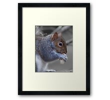 Eastern gray squirrel Framed Print