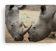 Rhino Horn by Horn Canvas Print