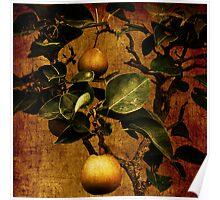 Bonsai Pear Poster