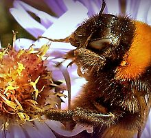 Somethings Bee-n Here Bee-fore Me! by naturelover