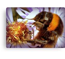 Somethings Bee-n Here Bee-fore Me! Canvas Print