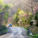 On The Road To Spring by NatureGreeting Cards ccwri