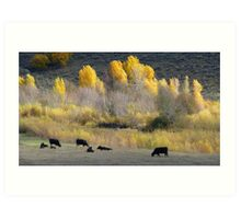 Angus and Aspens Art Print
