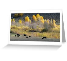 Angus and Aspens Greeting Card