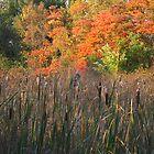 Sunset, Celery Farm Marsh, Bergen County by Jim Legge
