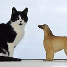 Are Afghans getting smaller, or cats getting bigger? by oulgundog