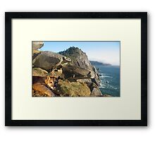 1070-California Coast Cougar Framed Print