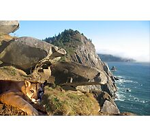1070-California Coast Cougar Photographic Print