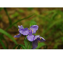 Capturing Rain Photographic Print