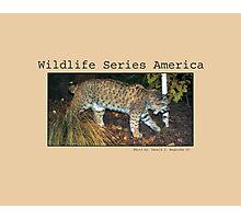 American Wildlife Series Photographic Print