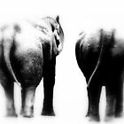 Elephant Gone by Deanna Roberts Think in Pictures