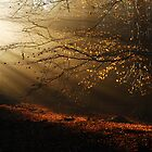 When the morning sun kisses the last leaves of autumn by jchanders