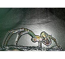Arachnid anatomy Photographic Print