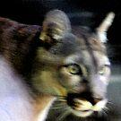 Wild Cat by GetCarter