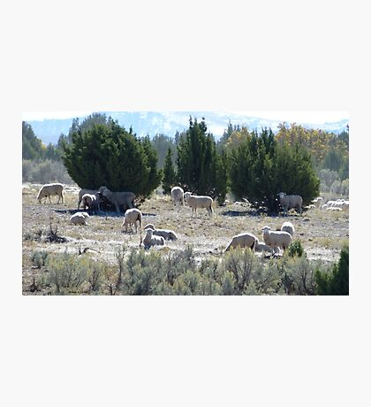 Sheep among the Junipers Photographic Print