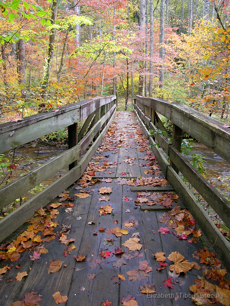 Autumn Bridge by Tibby Steedly