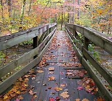 Autumn Bridge by Tibby Steedly