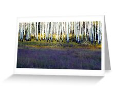 Aspen Trunks and Purple Meadow Greeting Card