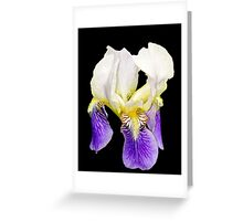 Purple Iris on Black Background Greeting Card