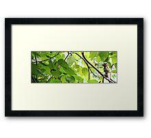 Arborealism Framed Print