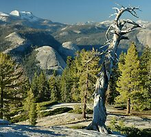 Sentinel Dome Evening by Stephen Vecchiotti