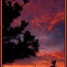 FIRE IN THE SKY by webdog