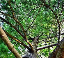 Up the Tall Pine by Tracy DeVore