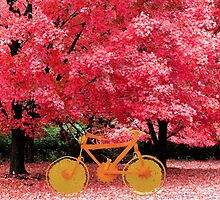 Bike in the park by clr-girl