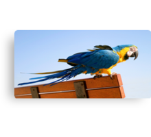 Macaw Extended Canvas Print
