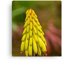 yellow flower bokeh Canvas Print