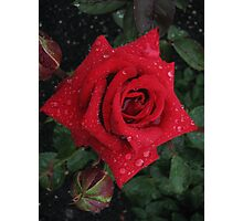 Deep red rose with raindrops Photographic Print