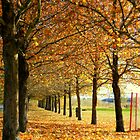 Leaf Alley by JustM