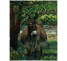Provence Donkey Photographic Print