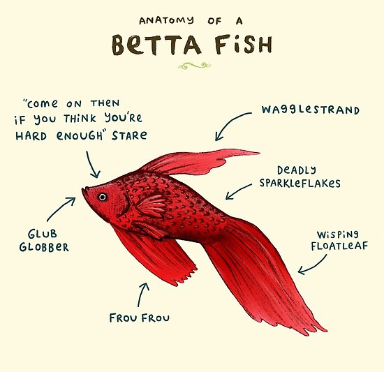 anatomy of a betta fish by sophie corrigan redbubble